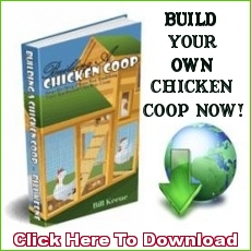 Chicken Coop Design Ebook